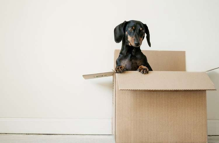 Hire a Removal Specialist